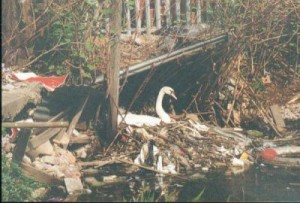 myFile nest built from pollution   regents canal  hackney