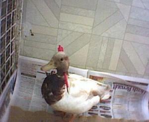myfile myfile duck