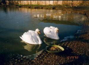 myfile myfile mates visiting the sanctuarys main lake