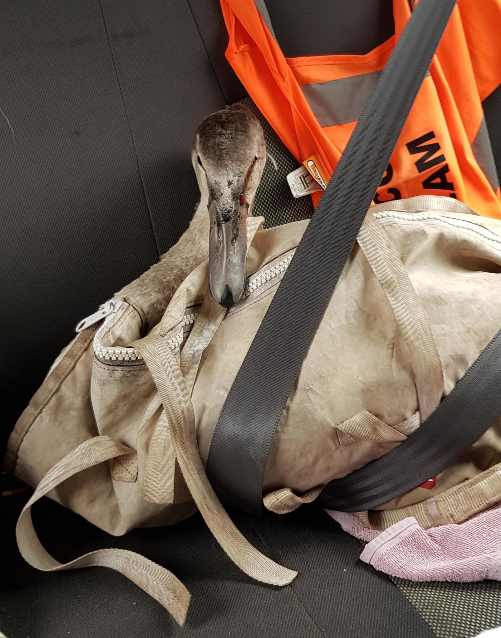 Motorway crash survivor ready to travel